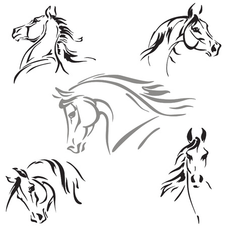 arabian horse: Five horse heads