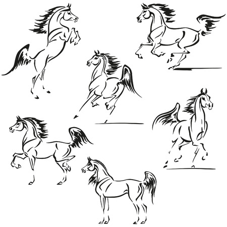 drawings: Simplified silhouettes of Arabian Horses. Illustration