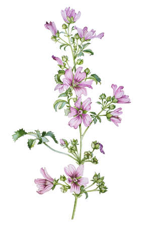 wild flower: Wild flower watercolor