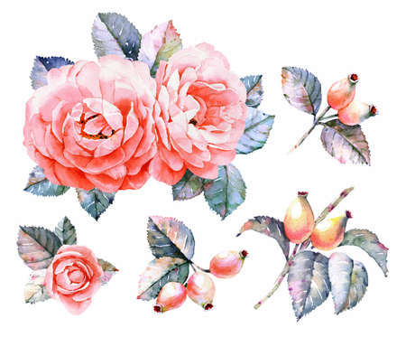 Roses watercolor elements