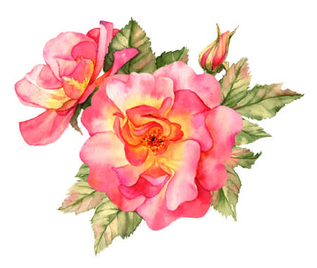 red rose: Bright red rose watercolor illustration Stock Photo