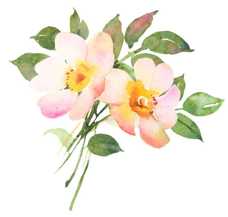 rose bush: Rose bush in blossom watercolor illustratiion