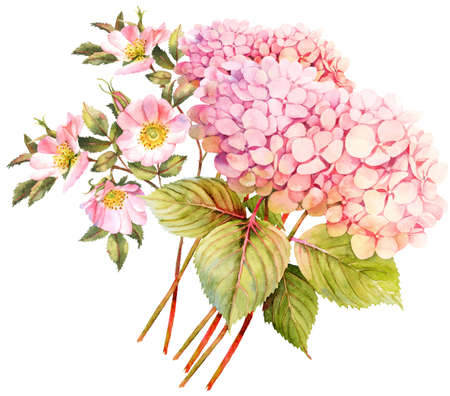 rose bush: FLower bouquet. Hydrangea and rose bush in blossom. Watercolor illustration