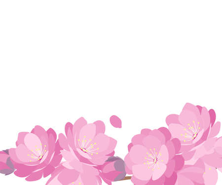 Peach Blossoms spring banner various verson