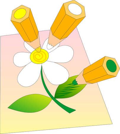 ox eye daisy: Coloured pencil drawing ox-eye-daisy.