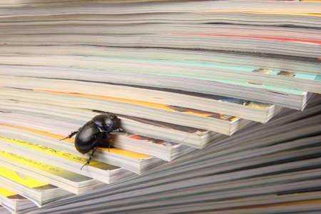 beetle climbing on pile of magazins photo