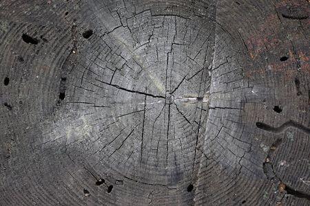 Sezione del vecchio ceppo di albero bruciato
