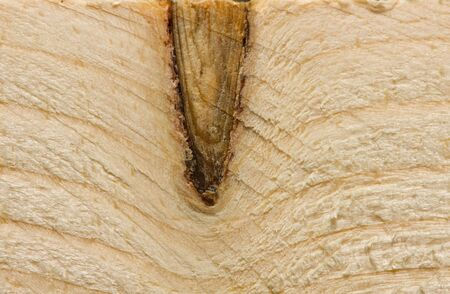 Macro closeup of wooden pattern
