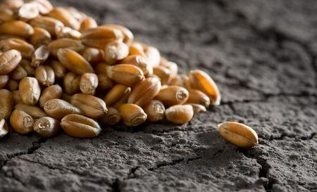 grain heap on wasteland background