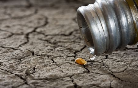 one corn and water drop on drought land as revival concept Stock Photo