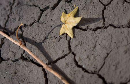 brandende planten op gebarsten bodem woestenij concept  Stockfoto