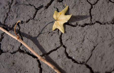 parched plant on cracked soil as wasteland concept photo