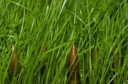 hidden danger: cartridge in grass as hidden danger concept Stock Photo