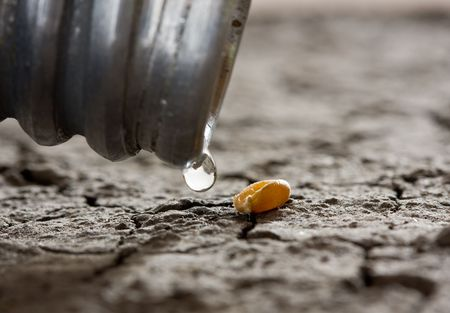 macro of water drop and one corn over dry soil - hope concept