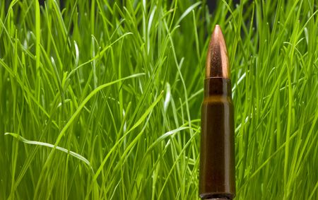 armaments: Macro of gun bullet on green grass background