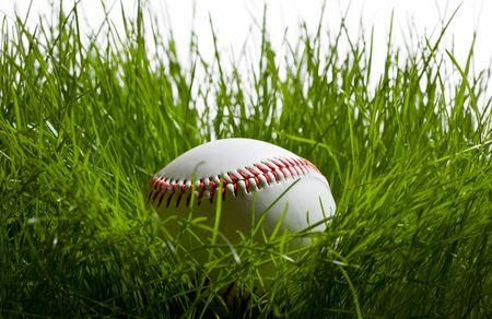 Close-up of baseball hidden in tall green grass photo