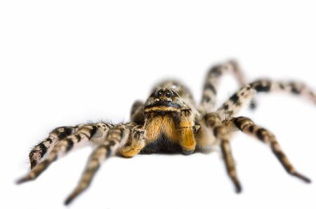 Close up view of spider, isolated on white Stock Photo - 6486373