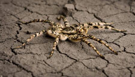 Macro of poisonous spider on eroded land background Stock Photo - 6486436