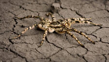 Macro of poisonous spider on eroded land background Stock Photo - 6486436