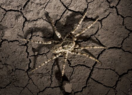 Extreme close up of tarantula on waterless land surface Stock Photo - 6486442
