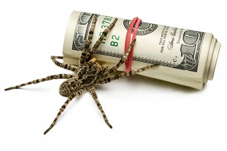 Close-up of spider behind money roll, saving investment concept photo