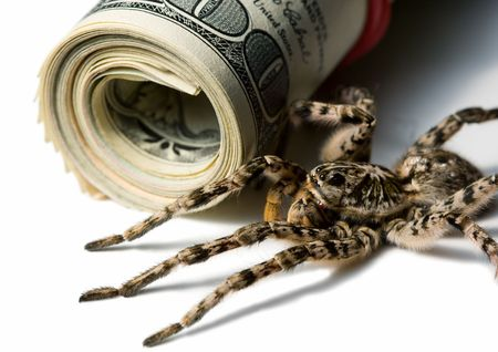 Tarantula behind money - investment protection concept   photo