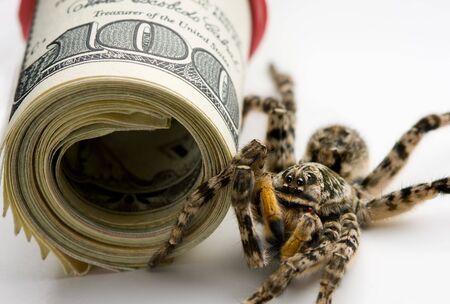 Macro di tarantola e banconote - concetto di protezione degli investimenti