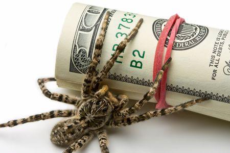 Money guard spider tarantula - savings protection concept  Stock fotó