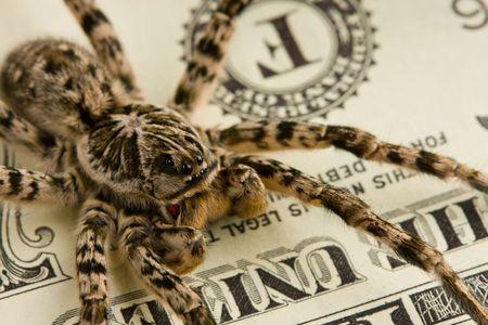 Extreme macro of tarantula defending bank notes photo