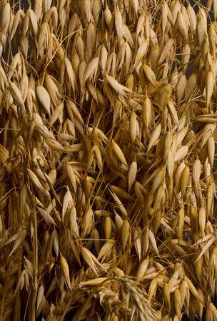 Macro shot of cereal, fertility concept Stock Photo - 7159594