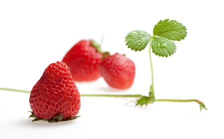 Ripe strawberry and growing runner isolated on white