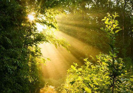 Gießen Sie die Sonnenstrahlen durch Bäume im nebligen Wald