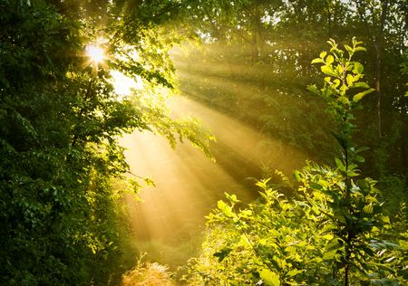 Sunbeams pour through trees in misty forest Stock Photo