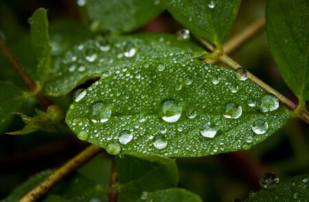 Macro of water drops on a leaf Stock Photo - 7896858