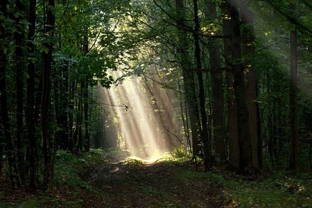 Sunlight pour through trees in foggy forest Stock Photo
