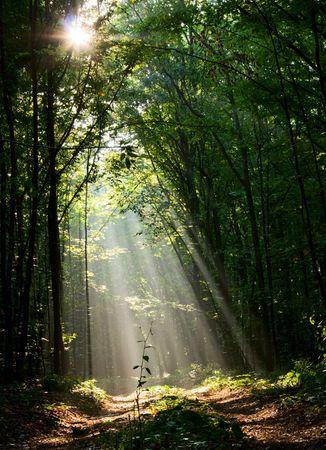 Zon stralen giet door structuren in foggy forest  Stockfoto