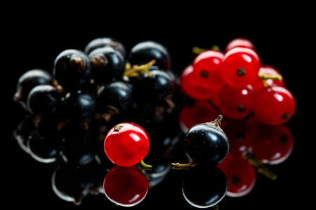 currants: Macro shot of currant branches over black reflective plane