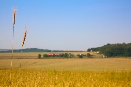 Farmland, focus on wheat ear in the foreground - farming concept Stock Photo - 8971973