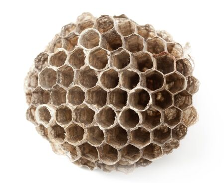 Macro of wasp paper nest  isolated on white
