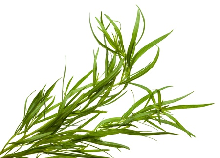 Macro of tarragon isolated on white background Stock Photo