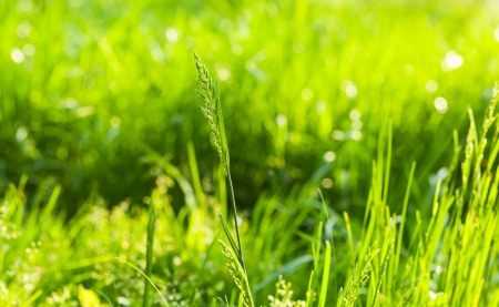 Macro of grass panicle over green meadow background photo