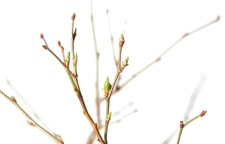Close-up of blooming stems bunch isolated on white