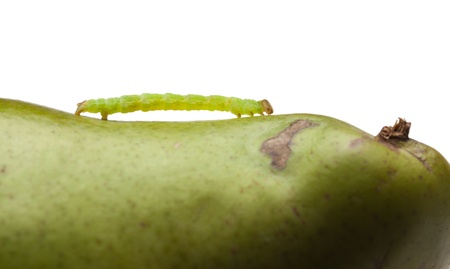 Macro of inchworm on green pear isolated on white  photo