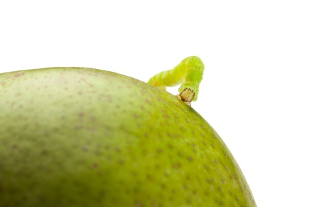 Macro of looper on green pear isolated on white  photo
