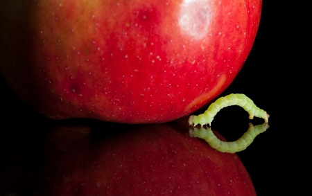 inchworm and red ripe apple isolated on black  photo