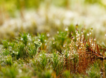 Micro landscape of forest floor with moss and lichen photo