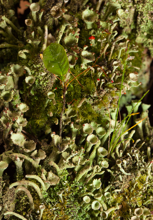 Micro landscape of lichen, grass and moss on forest floor photo