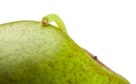 Pest worm (codling moth caterpillar) climbing on pear photo