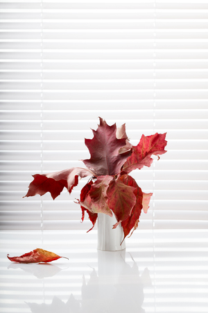 jalousie: Interior composition of red dried oak leaves in vase over white jalousie background