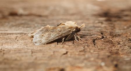 feelers: Macro side view of moth on wood Stock Photo